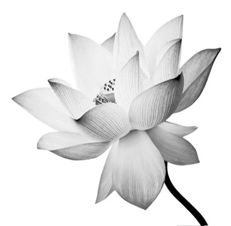 Fleurs fleuristes